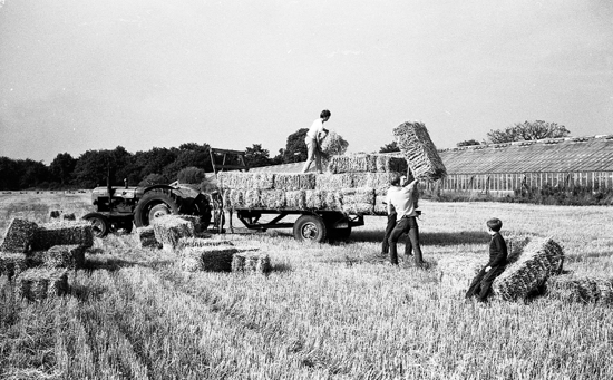 Photograph of Collecting the hay bales, Potterells Farm, Bulls Lane, September 1969