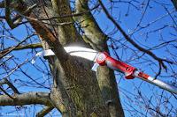 wycinanie suchej gałęzi