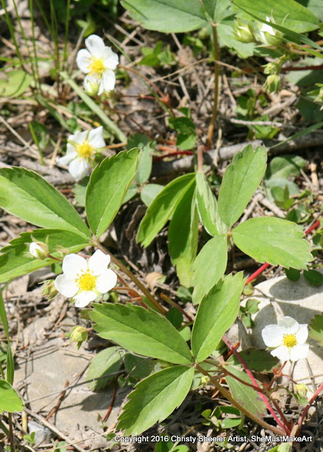 The white blossoms of the wild strawberry plant have bright yellow centers.