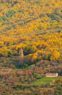 Laderas del Valle del Jerte. Un paisaje cultivado