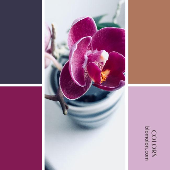 variedad_en_color_combinacion_14