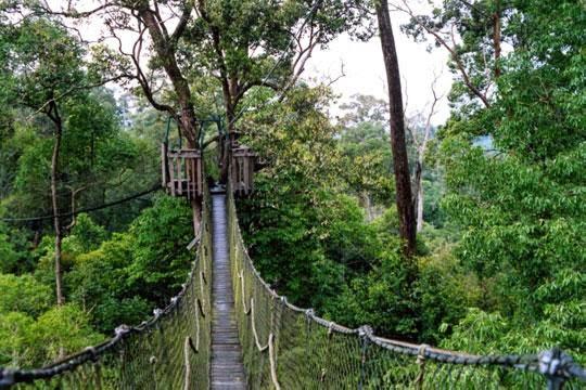 Bukit Bangkirai