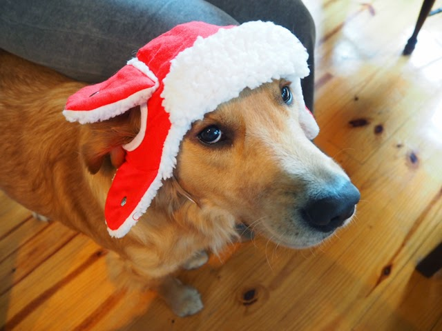 Christmas Costume Dog
