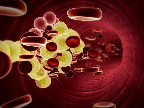 Améliore la santé cardiovasculaire