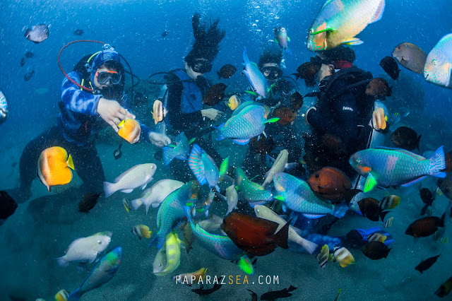Scuba diving, Dive Philippines, Underwater Photography, Learn Scuba, Its More fun in the Philippines, Travel Ph, PaparazSea