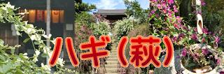 鎌倉のハギ