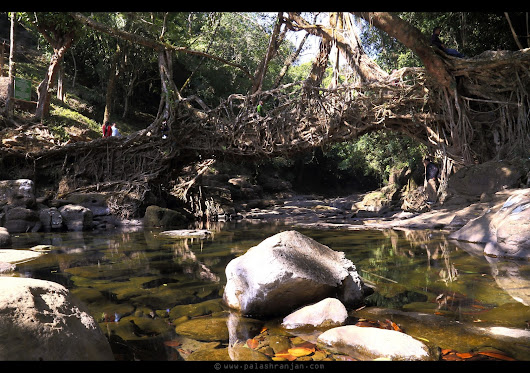 CELEBRATING LIFE!!: LIVING ROOT BRIDGE -  MEGHALAYA !
