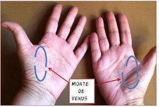 Monte de Venus en las manos