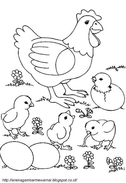 Gambar Mewarnai Ayam (1)