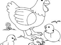 Gambar Ayam Betina Untuk Mewarnai