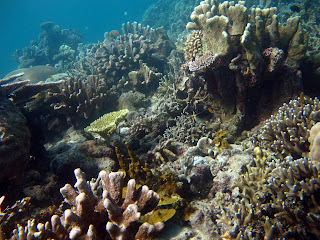 Pemandangan Raja Ampat di Papua Barat, Foto Alam, Laut, Pantai dan Pulau