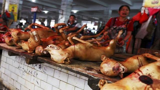 Ngeri Melihat Tradisi Orang China yang Hobi Memakan Daging Kucing dan Anjing