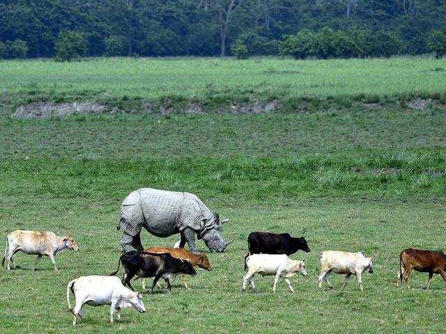 असम के 5 सबसे अच्छे राष्ट्रीय उद्यान