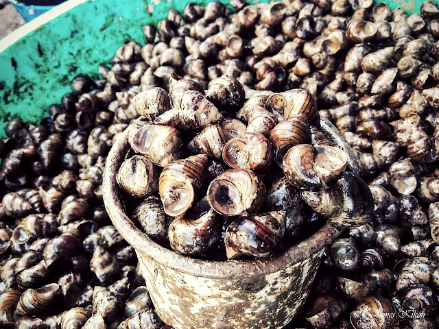 naga-food-nagaland-snails