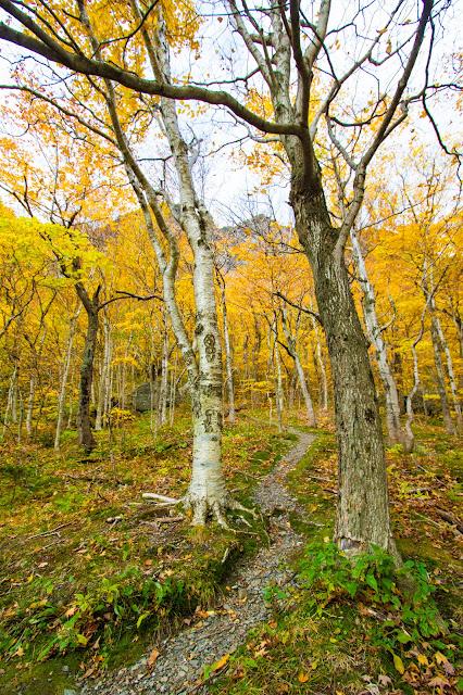 Foliage al Monte Mansfield
