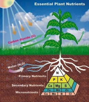 Balkan ecology project plant elements nutrients for Soil nutrients