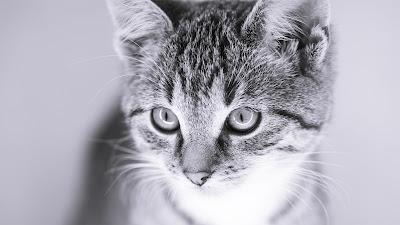Katzenportrait von Fotograf Michael Schalansky