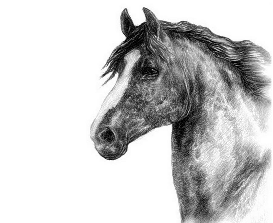 Pinterest Dibujos De Animales