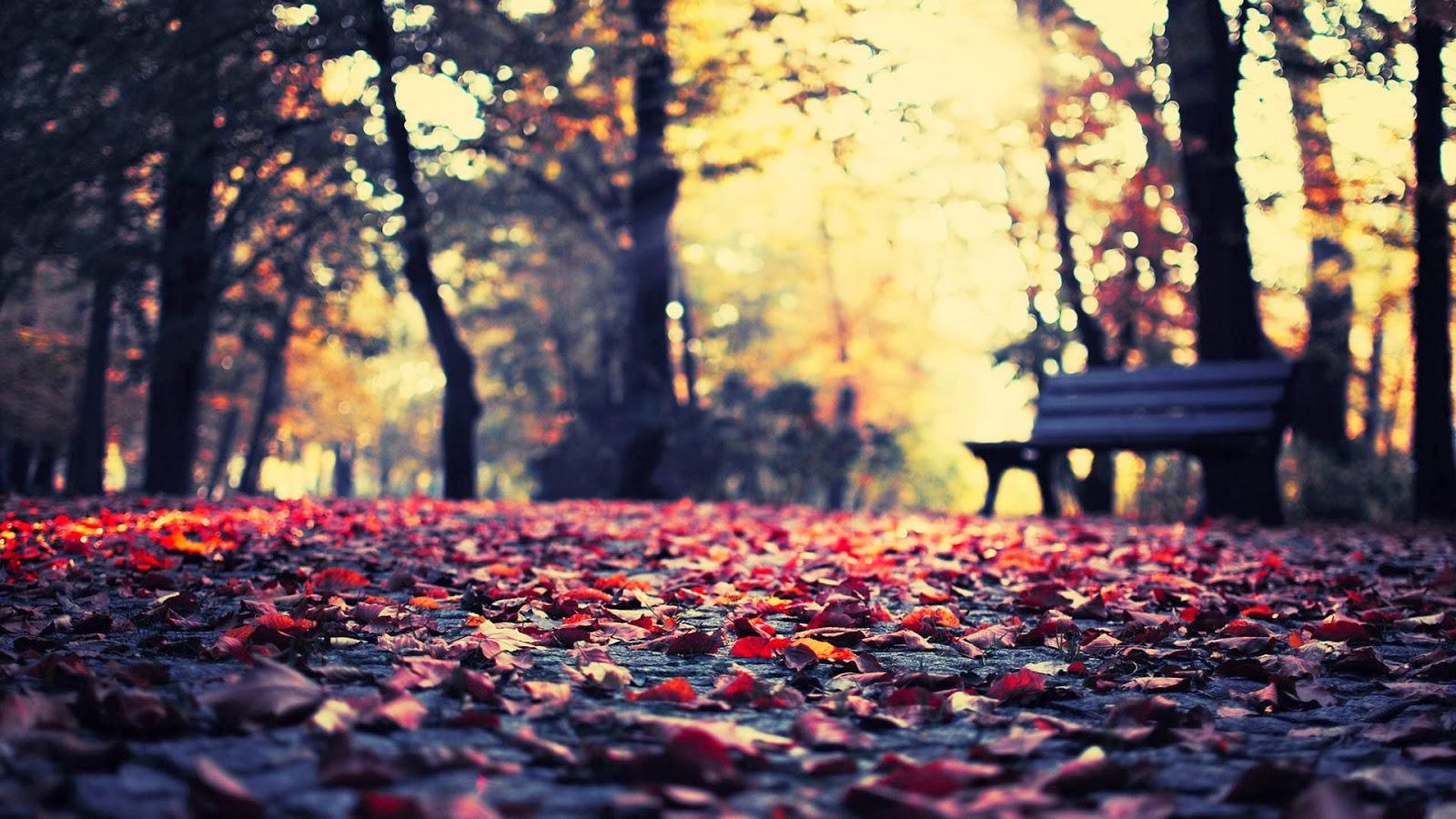 Imagenes hilandy fondo de pantalla paisaje banco en un parque - Descargar autumn leaves ...