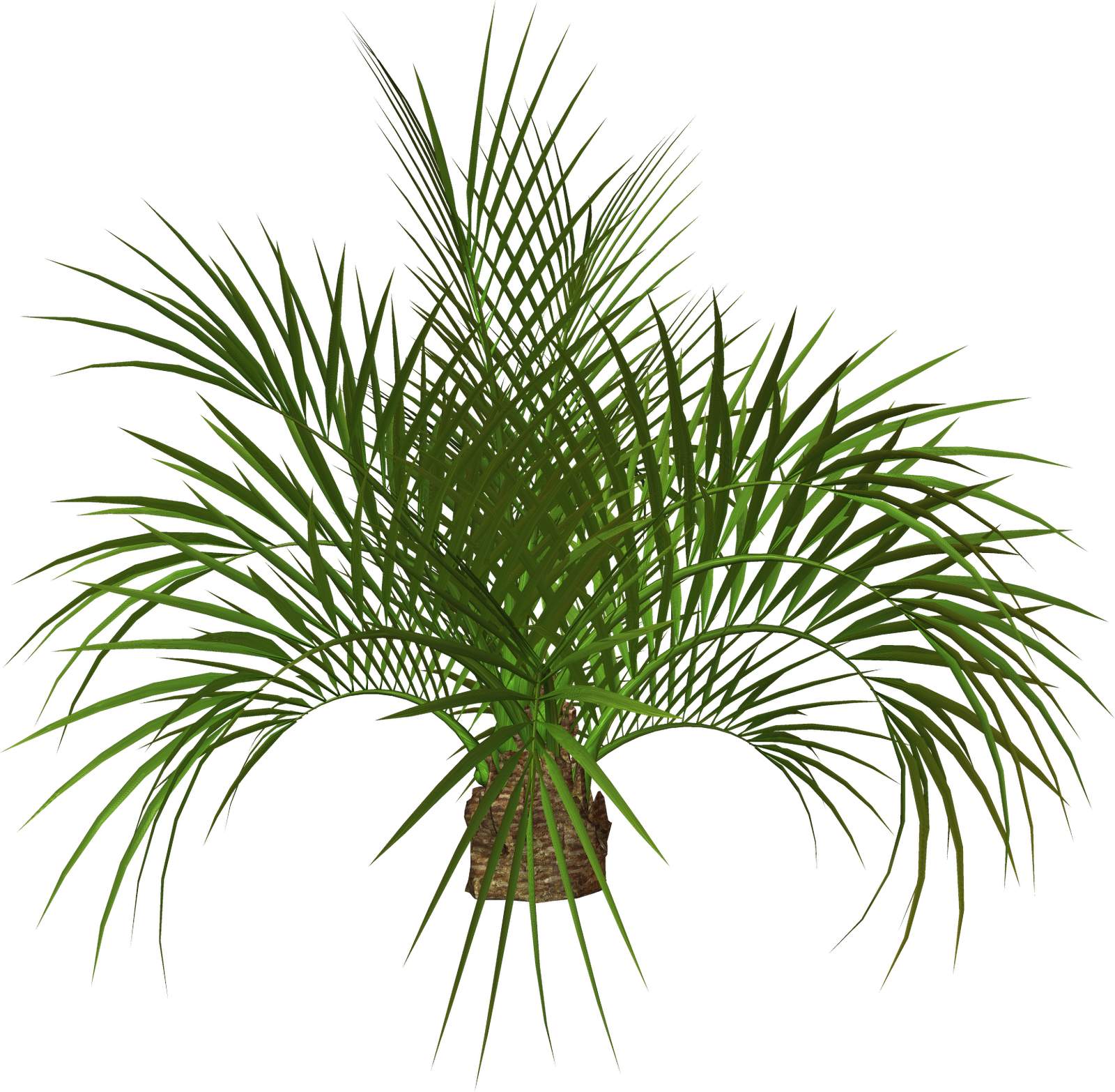Palm Tree Top View Png Palm Tree And Free Png Flower Clipart