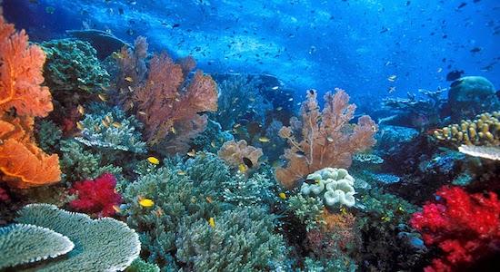 Keindahan Bawah Laut Pulau Weh