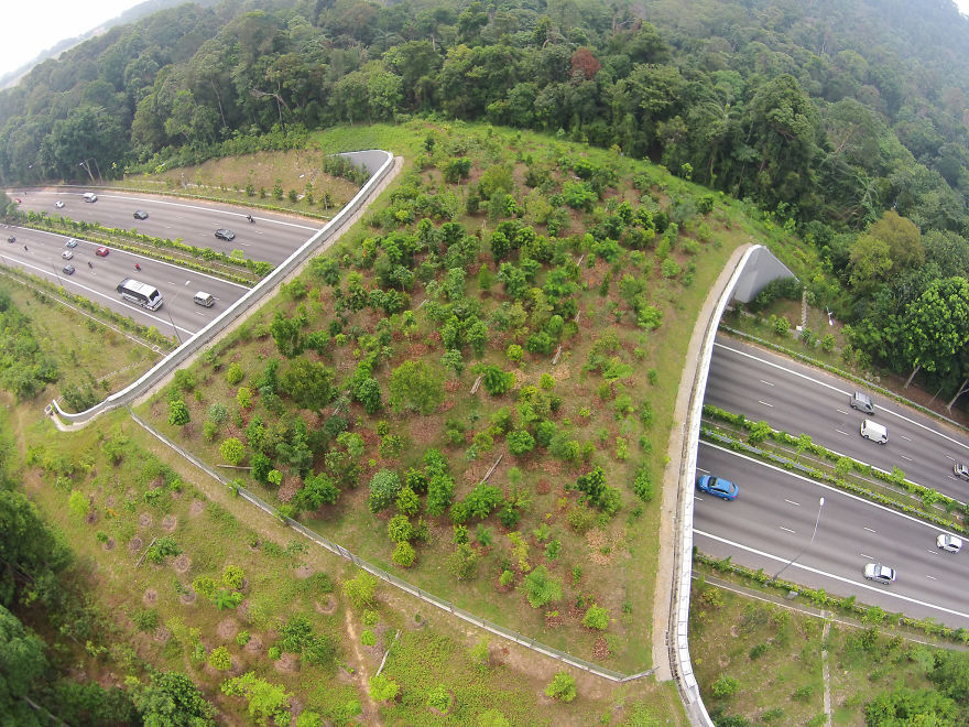Ecoduct In Singapore