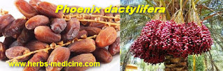 Date Fruit Benefit pregnant