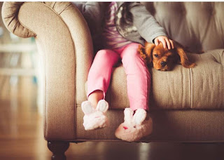 truco evitar perro muerda muebles