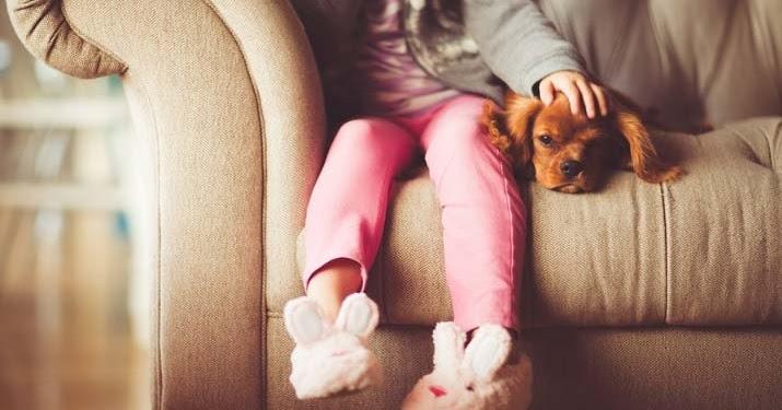 Mascotas evita que tu cachorro muerda los muebles - Remedios caseros para que mi perro no muerda los muebles ...