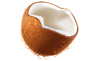 coconut clipart images