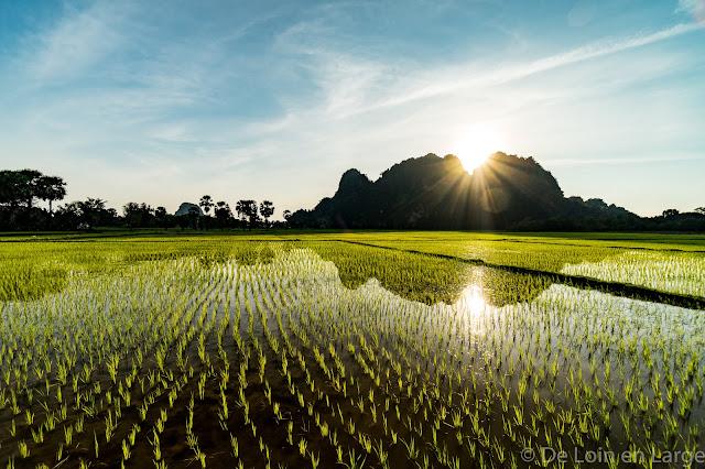 Rizières - Ya-Thay-Pyan Cave - Ricefields