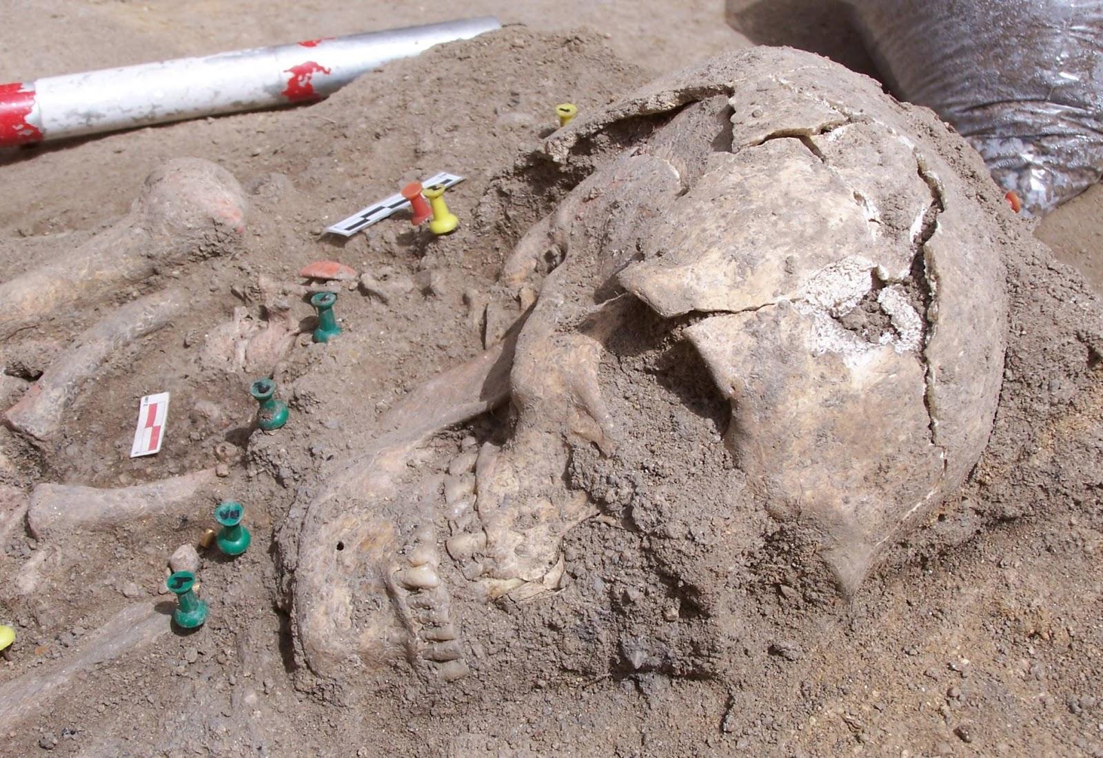Cráneo de la gran dama, cuerpo femenino encontrado en el yacimiento de Humanejos (Parla). Foto: Sara Genicio