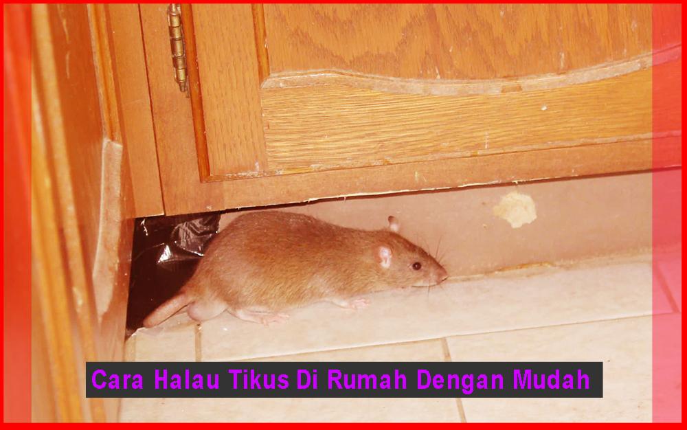 Cara Halau Tikus Di Rumah Dengan Mudah - Desain Rumah