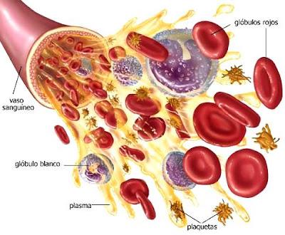 Imagen de los glóbulos rojos fluyendo de un Vaso sanguíneo