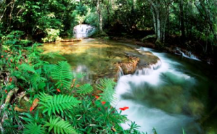 Fungsi Hidrologis Hutan