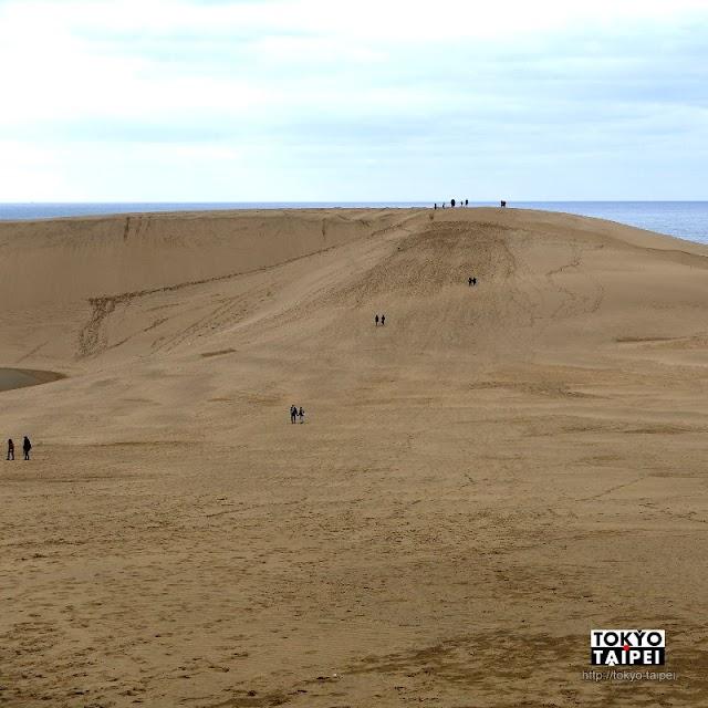 【鳥取砂丘】和駱駝打聲招呼 越過沙丘的馬背看到一片日本海