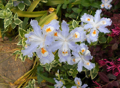 千鳥が淵で見掛けた花と同じ花