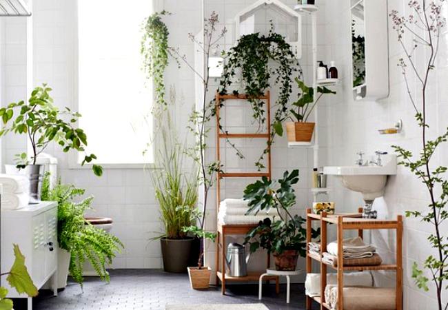 Pianta Camera Da Letto Ossigeno : Le piante in camera da letto detto fra noi
