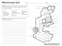 Compound Microscope Diagram