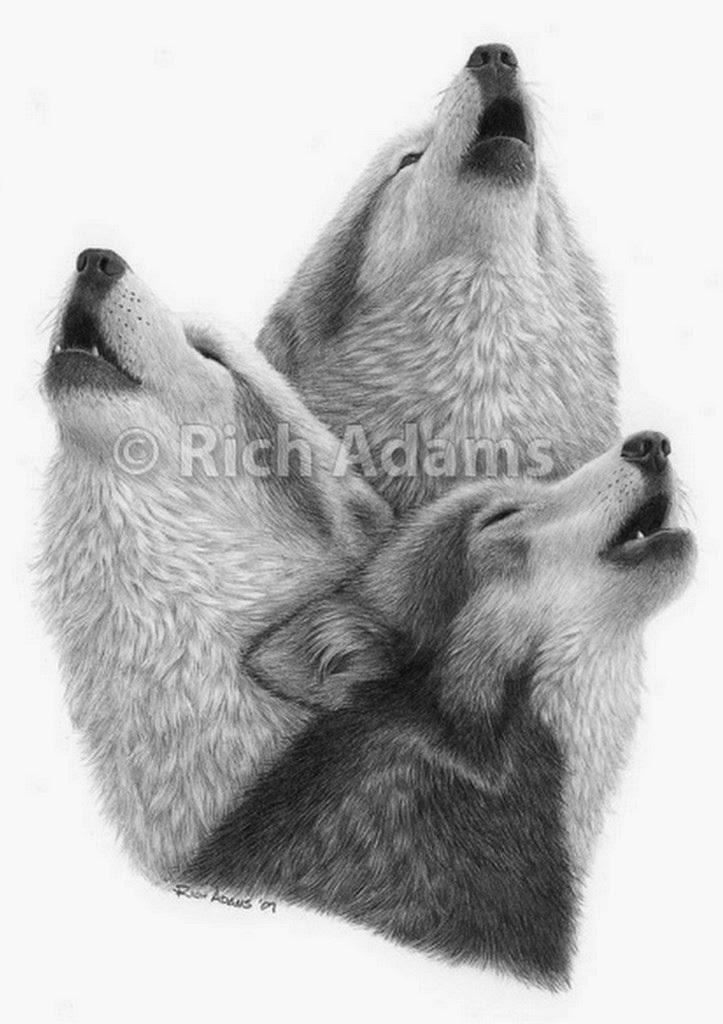 Pintura Moderna Y Fotografía Artística Cuadros De Animales Lapiz