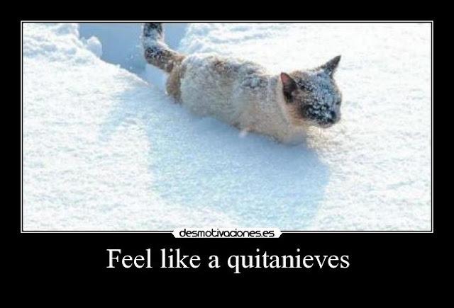 Gato quitanieves