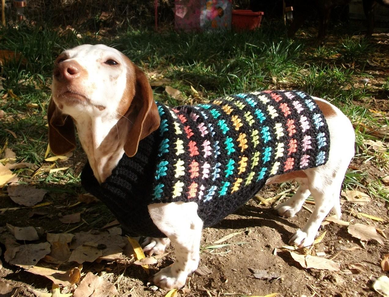 Copper Llama Studio Rainbow Crochet Dog Sweater