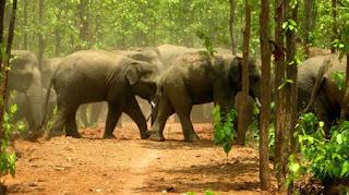 Unseen World of Elephants In Dalma,dalma elephant area