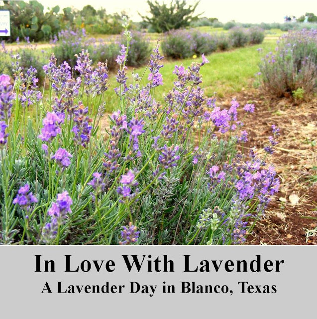Texas Hill Country Girlfriends Love Of Lavender