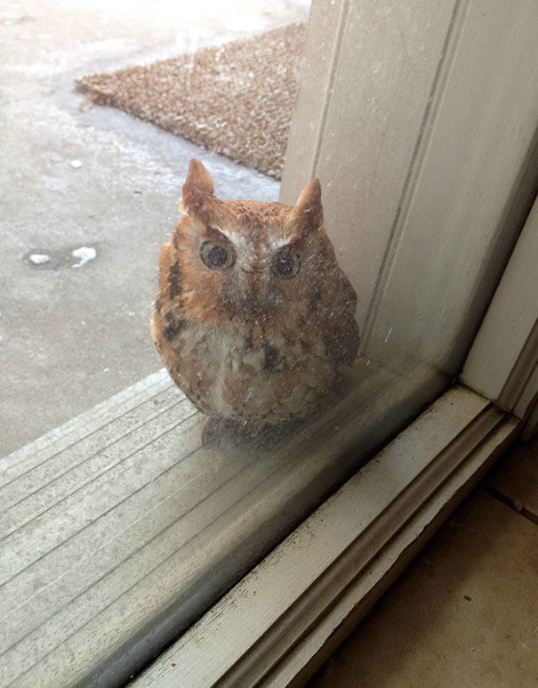 40 Heartwarming Pictures Of Animals - My Brother Said He Heard A Boop Against The Window. Found This Little Guy