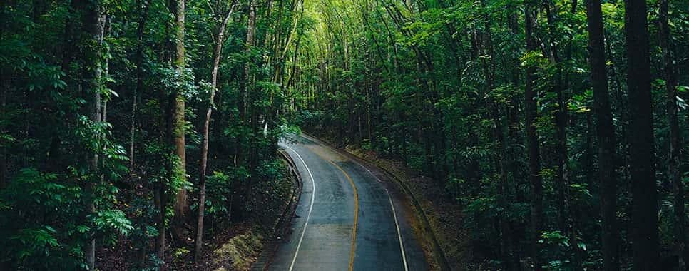 Travel Destination - Bilar Man-Made Forest, Bilar, Philippines
