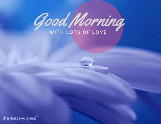 good morning beautiful flowers pictures with drop of water drip