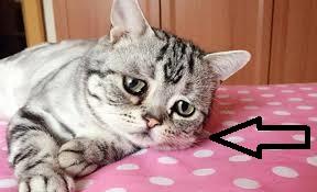 فقدت يا قطتي! ماذا يجب أن أفعل؟