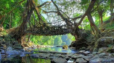 Pohon Akar Bridges, Cherrapunji, Meghalaya, India