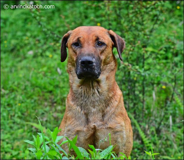 Standstill, Expression, Dog,